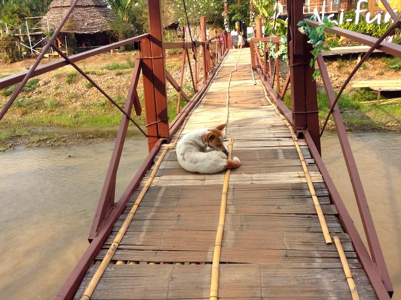 橋の上のイッヌ