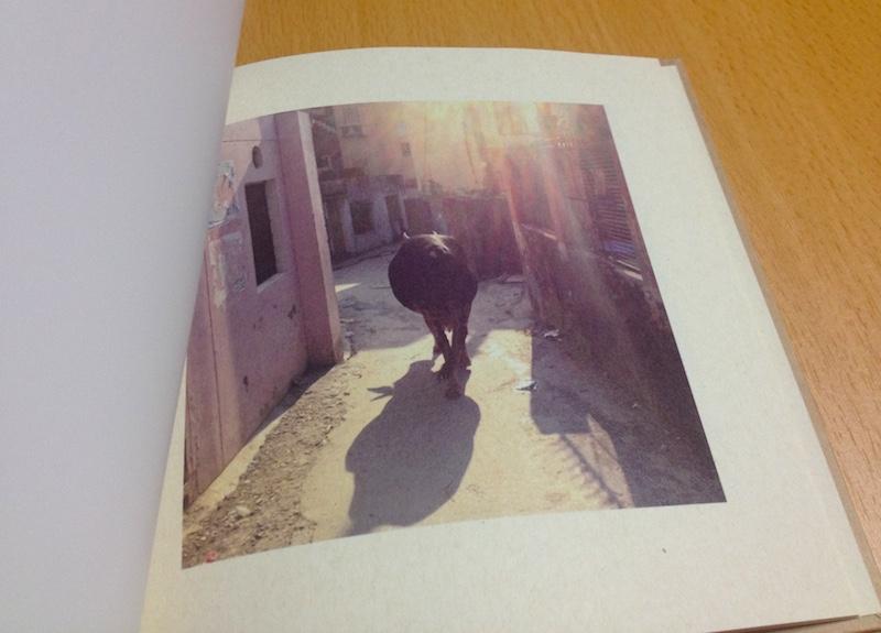 インドの牛の写真集