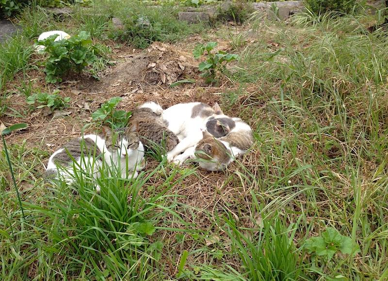 鞆の浦の猫たち