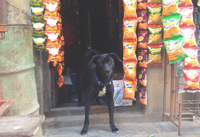 店番する犬